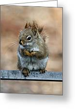 Red Squirrel On Patio Chair II Greeting Card