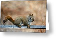 Red Squirrel On Patio Chair Greeting Card