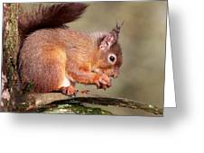 Red Squirrel Perched Portrait Greeting Card