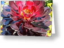 Red Succulent Plant Greeting Card