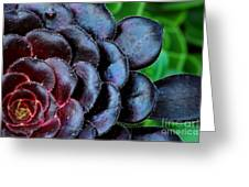 Red Succulents Greeting Card
