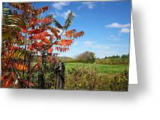 Red Sumac Tree Greeting Card