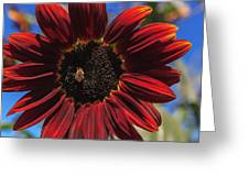 Red Sun Honey Greeting Card