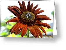 Red Sunflower After The Rain Greeting Card