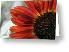 Red Sunflower Close-up Greeting Card