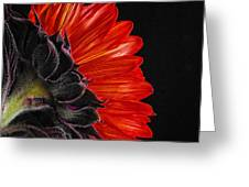 Red Sunflower Vii  Greeting Card