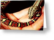 Red Tail Baby Boa - Snake - Pet Greeting Card