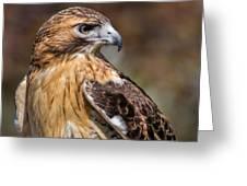 Red Tail Hawk Greeting Card