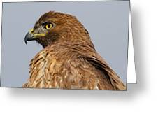 Red Tail Hawk Portrait Greeting Card