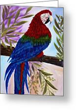 Red Tail Macaw Greeting Card