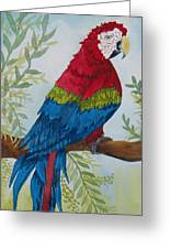 Red Tail Macaw Too Greeting Card