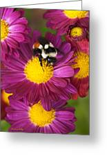 Red-tailed Bumble Bee Greeting Card