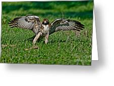 Red-tailed Hawk & Gopher Snake Greeting Card