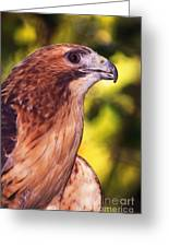 Red Tailed Hawk - 59 Greeting Card