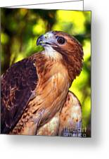 Red Tailed Hawk - 66 Greeting Card