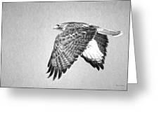 Red Tailed Hawk II Greeting Card