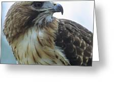 Red-tailed Hawk Profile Greeting Card