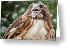 Red-tailed Hawk Square Greeting Card by Bill Wakeley