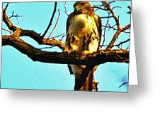 Red-tailed Hawk Watching Greeting Card
