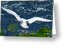 Red Tailed Tropic Bird Greeting Card