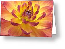 Red Tipped Greeting Card