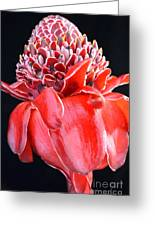 Red Torch Ginger On Black Greeting Card