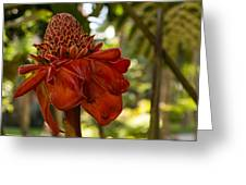 Red Torch Ginger Lily In Hawaii Greeting Card
