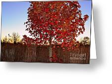 Red Tree At Sunset Greeting Card