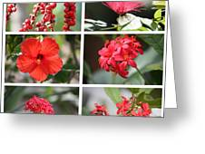 Red Tropicals Collage Greeting Card