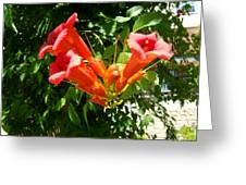 Red Trumpet Greeting Card