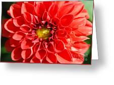 Red Tubular Flower Greeting Card