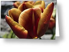 Red Tulip  2116 Greeting Card