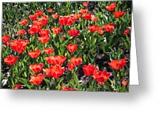 Red Tulip Bed Greeting Card
