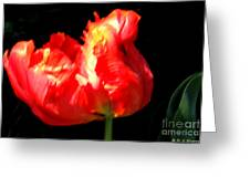 Red Tulip Blurred Greeting Card by M C Sturman