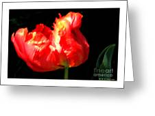Red Tulip Blurred Greeting Card