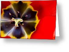 Red Tulip Macro Greeting Card