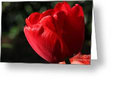 Red Tulip Greeting Card