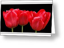 Red Tulip Triptych Greeting Card