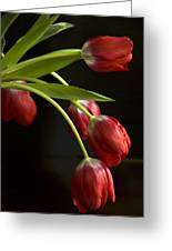 Red Tulips Greeting Card by Cindy Rubin