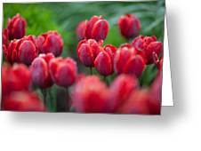 red tulips II Greeting Card