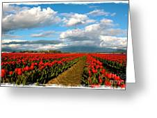 Red Tulips Of Skagit Valley Greeting Card