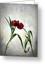 Red Tulips On A Letter Greeting Card