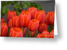 Red Tulips Outlined In Yellow Greeting Card