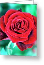 Red Velvet Palm Springs Greeting Card