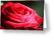Red Velvet Rose By Morning Light  Greeting Card