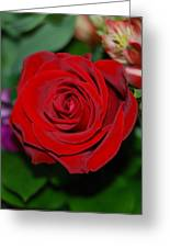 Red Velvet Rose Greeting Card