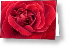Red Velvety Rose Greeting Card