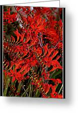 Red Devils Tongue Vine Vertical Greeting Card
