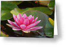 Red Water Lily 4 Greeting Card