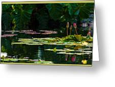 Red Water Lily In A Tropical Pond Greeting Card by Julio Solar